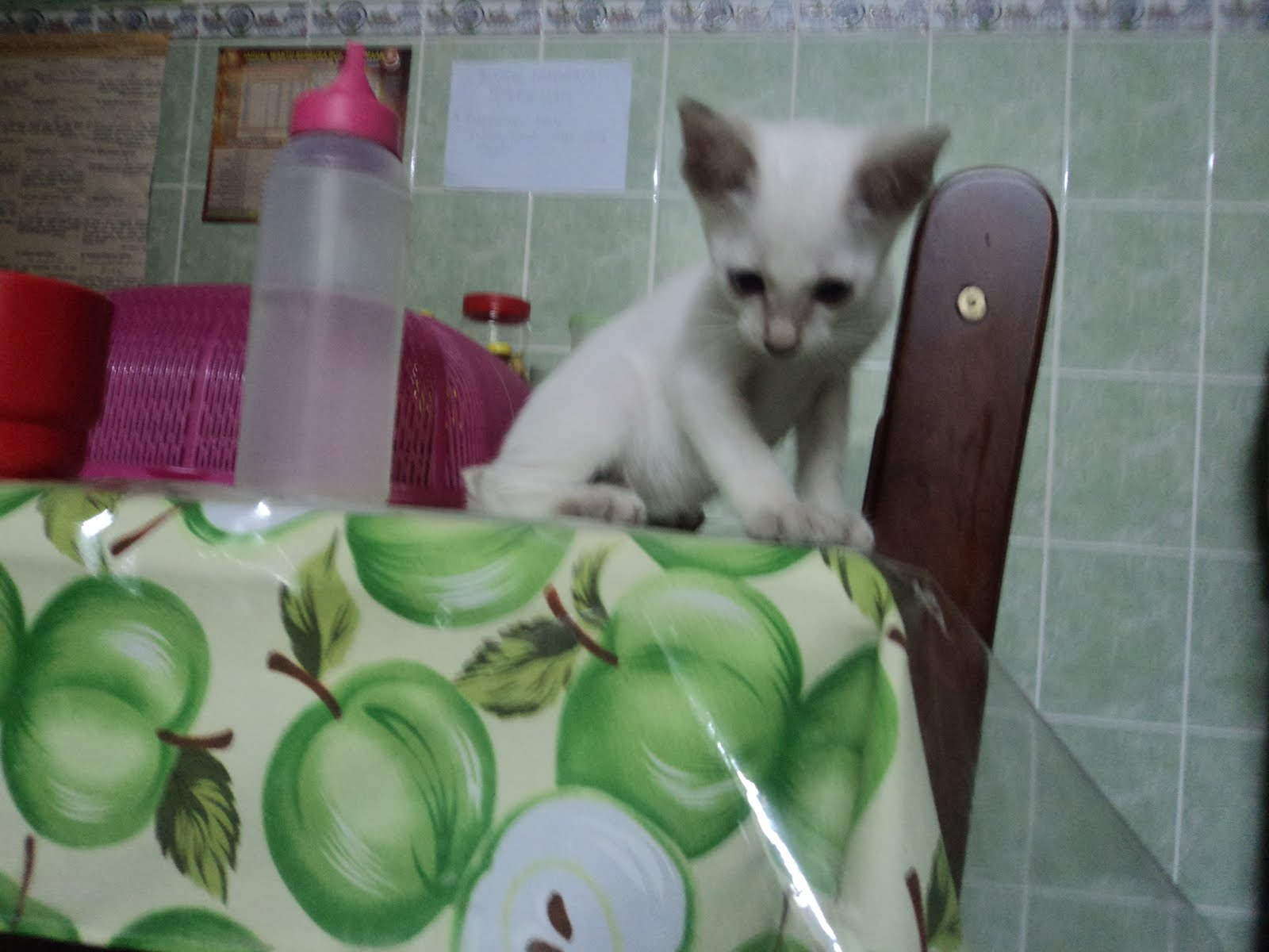Exceladorable Tendencies Tshirt Yuck Cat Hitam S Posted