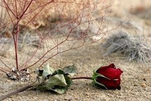 Lettre d'amour perdu 3