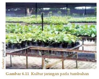 Penerapan Bioteknologi Bidang Pertanian