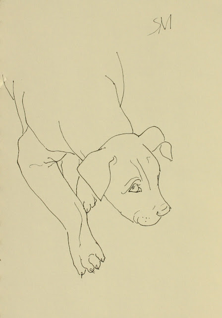 Puppy Looking, Pale-eyed, Sarah Myers, S. Myers, line-drawing, drawing, ink, study, sketch, paper, art, dog, arte