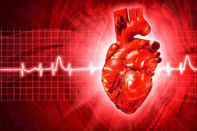 8 Things You Need To Know About Your Heart