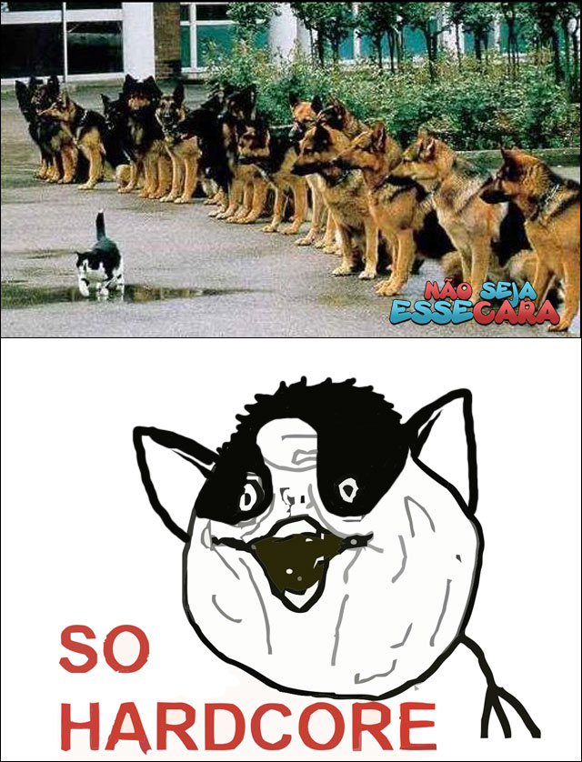 seja esse gato