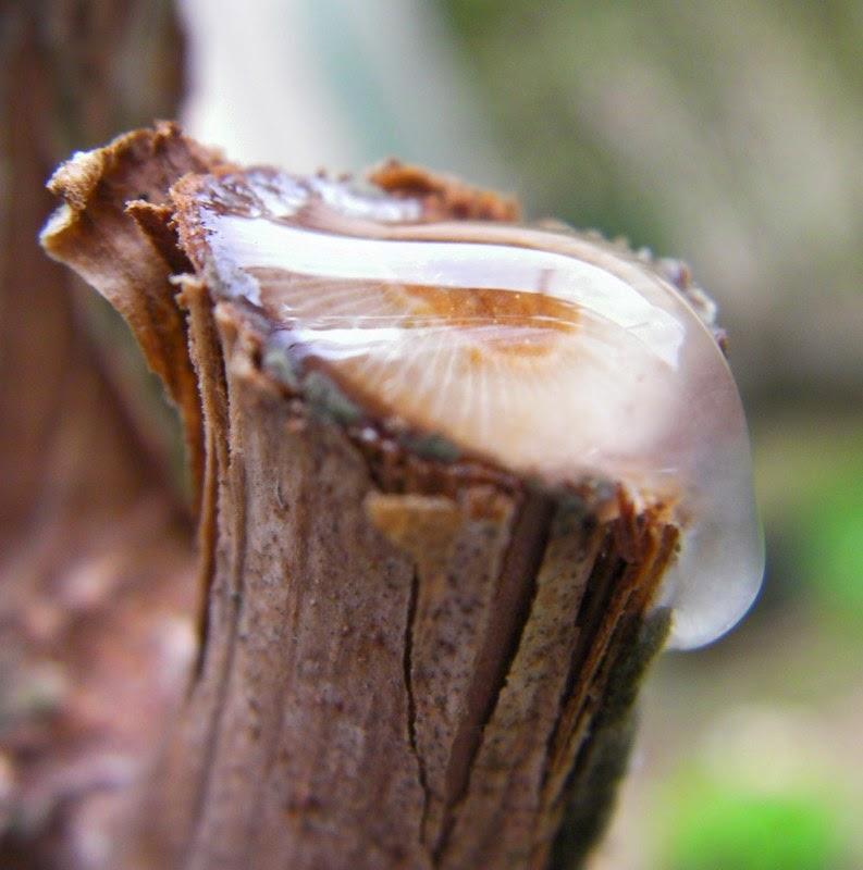 Les secrets de la taille et de la greffe des arbres fruitiers bio apprenez tailler la vigne - Quand tailler les fruitiers ...