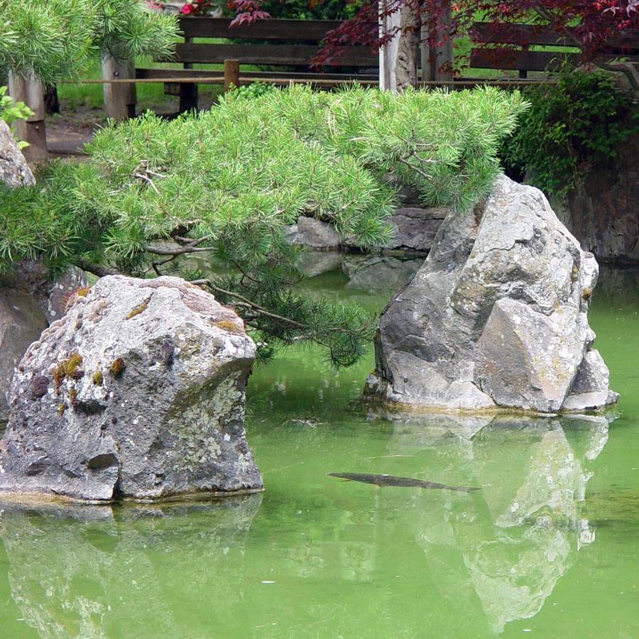Eden by the bay japanese garden highlights for Japanese garden features
