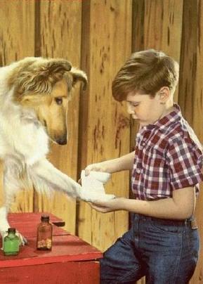 Intoxicaciones y picaduras a perros
