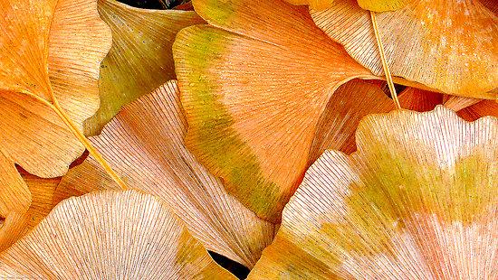 Autumn Amber4