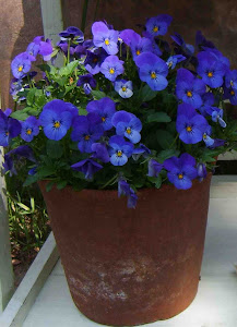 Pots and Pansies Gardenalia