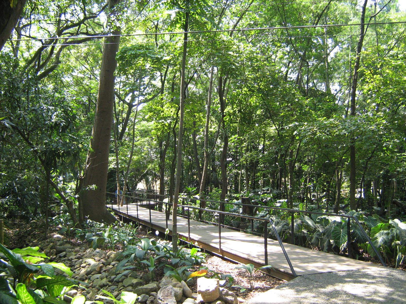Jard n bot nico en rio uyama for Arboles del jardin botanico