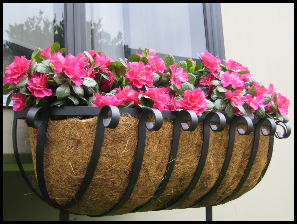 All About Window The Best Flowers For Window Boxes
