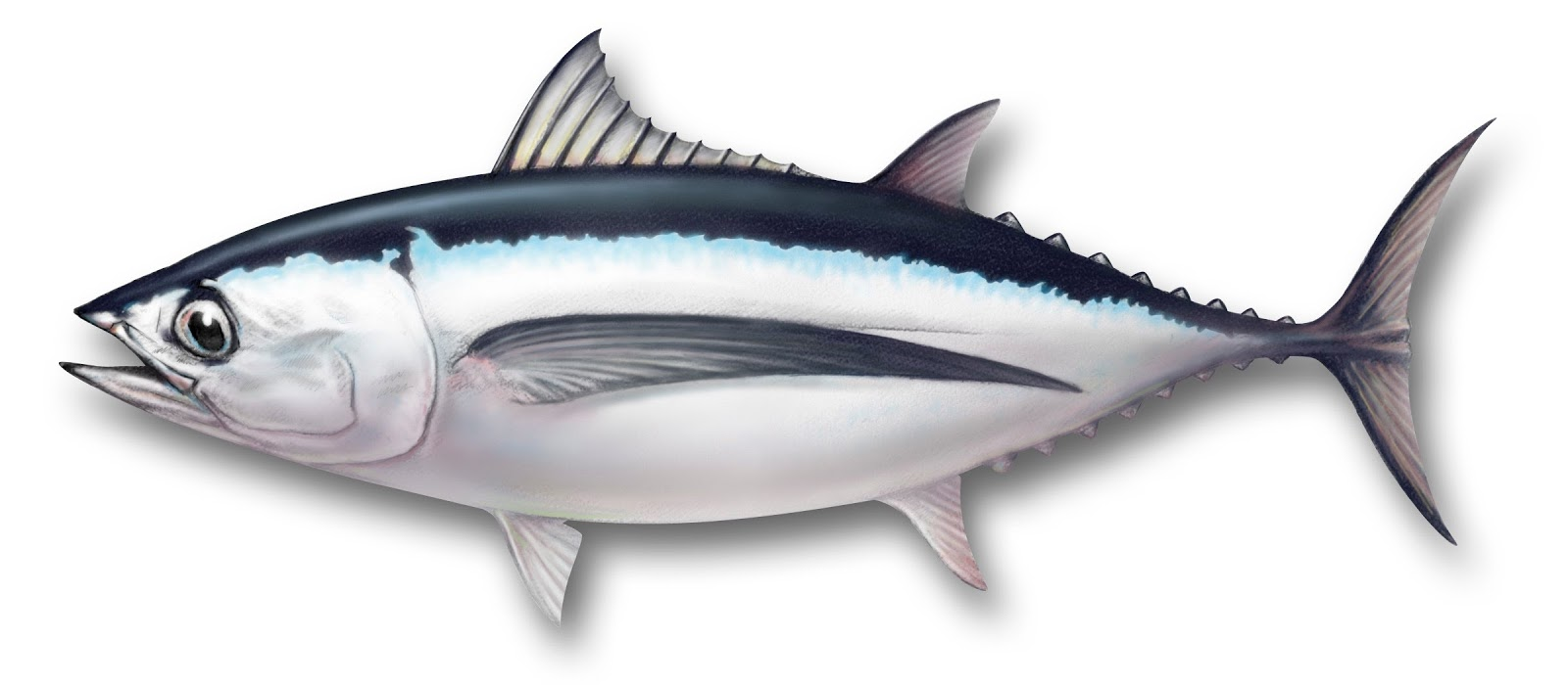 Healthiest fish to eat for What do tuna fish eat