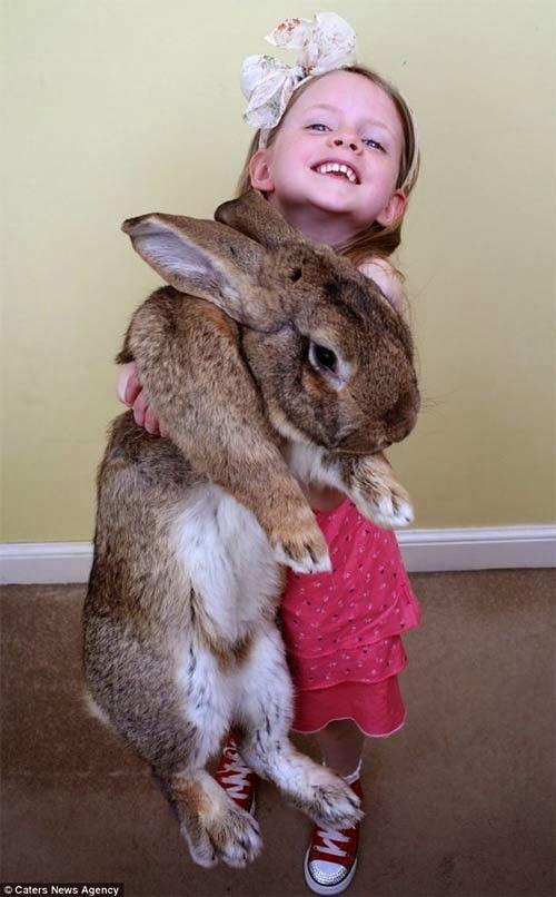 Chú thỏcó tên gọi Darius này dài 1,32m, nặng khoảng 22kg và được công nhận là lớn nhất thế giới