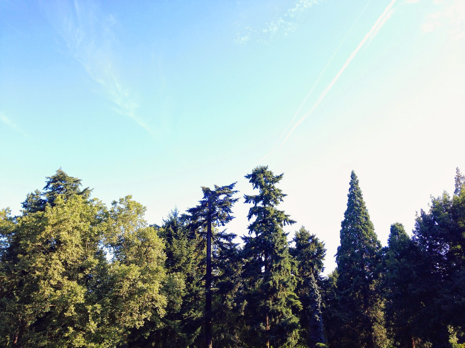 vegan road trip and camping throgh portland sisters north bend oregon seattle washington vancouver british colunmia canada