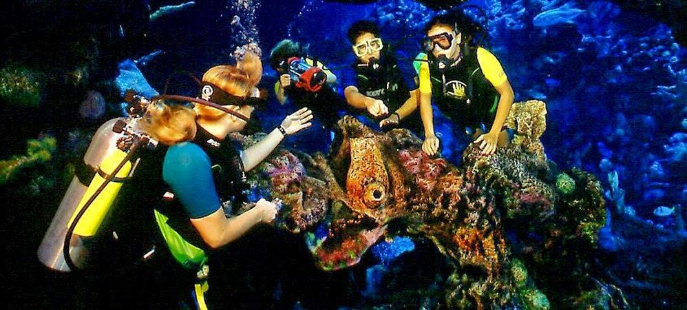 Mergulho e nado no Epcot DiveQuest na Disney em Orlando