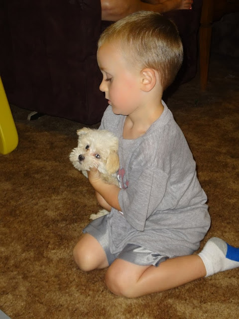 Cohen with tiny white puppy