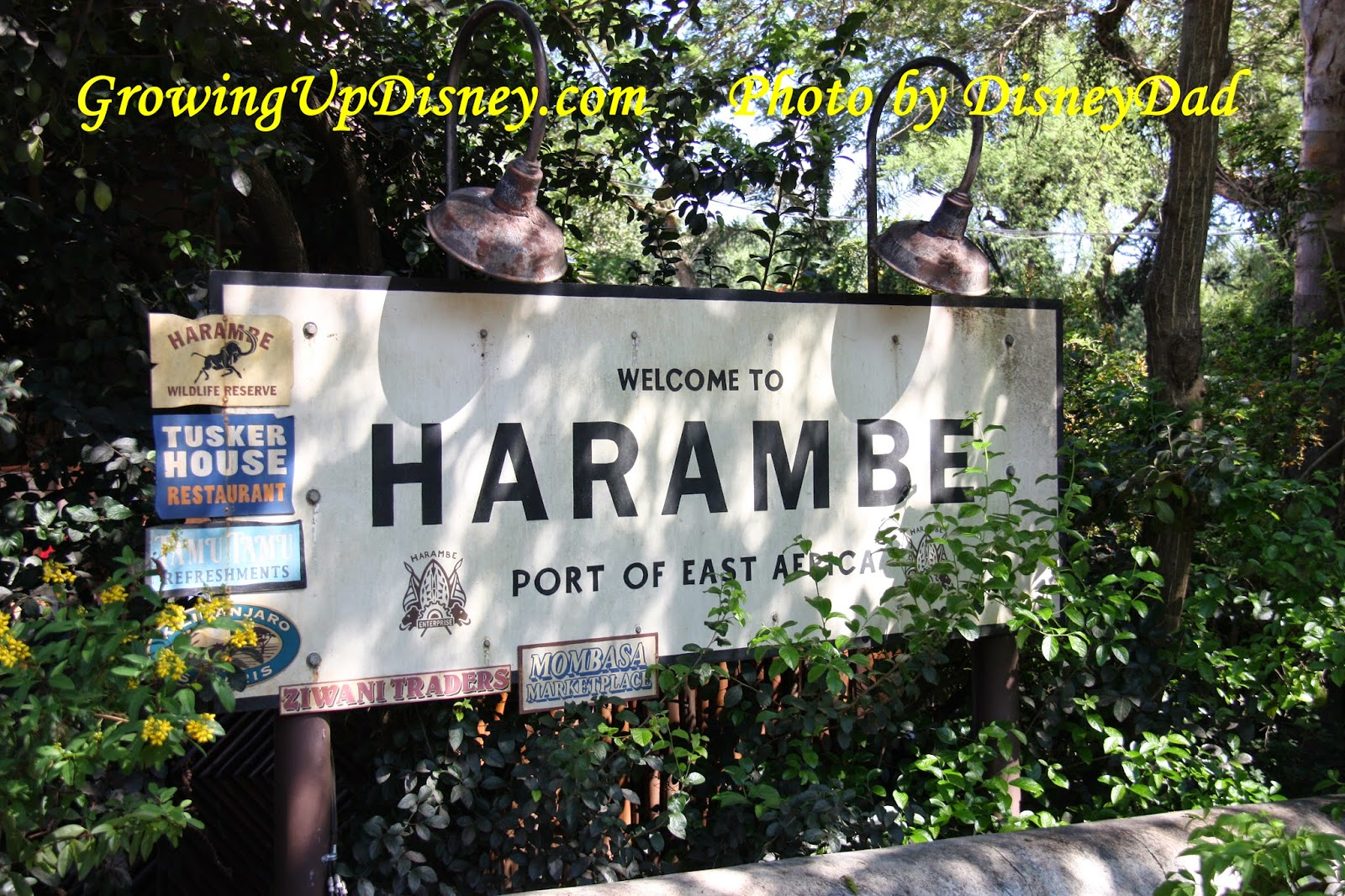 Harambe at Disney's Animal Kingdom