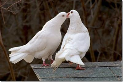 Lover Animals kissing