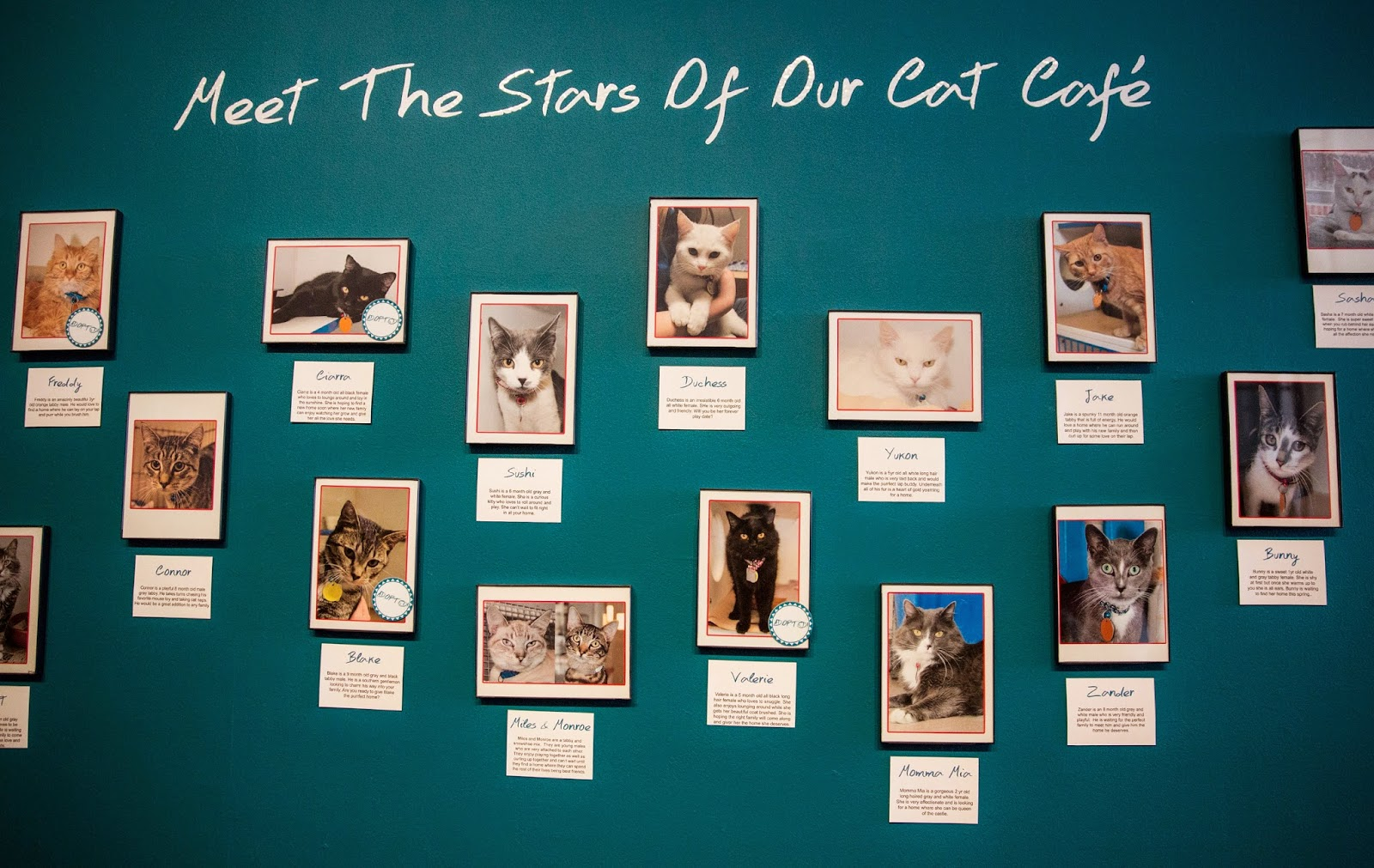 Adoptable Cats, America, Animals, Business, Cats, Cats Cafe Shop, Cats Shop, Economy, New York, Pets, Pop up Cats Cafe, US,