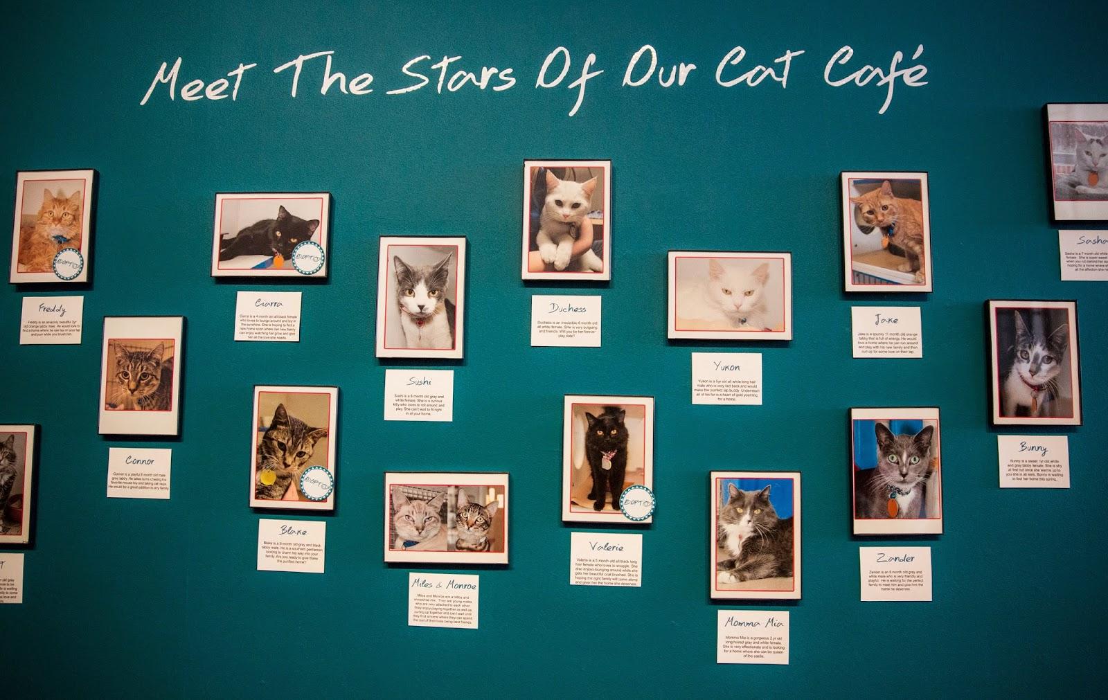 "Pop up ""Cat Cafe"" opens in America"