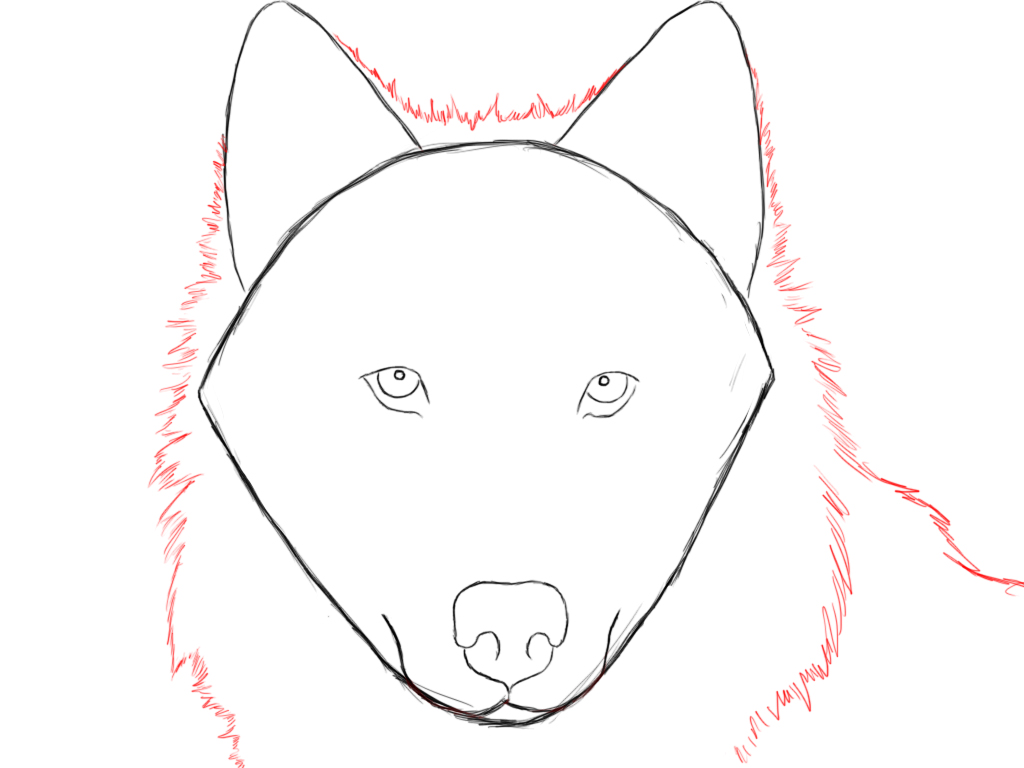 now that you have the basic head of your wolf mapped out draw a layer of fur surrounding the head and ears