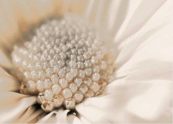 Tribute to June ~ Pearl #june #birthstone #pearl
