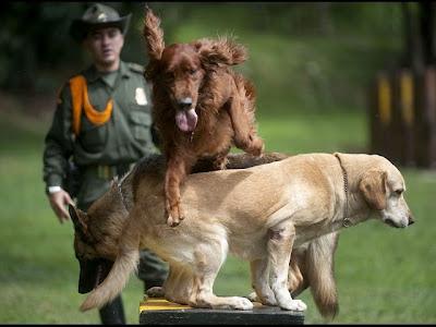 Entrenamiento Militar Unidad Canina