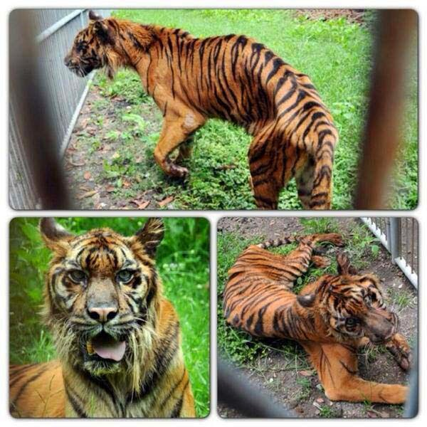 """They Call This The """"Zoo Of Death"""". And Here's Exactly Why It Needs To Be Shut Down"""