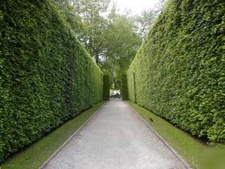 Arte y jardiner a superficies verticales materiales for Arboles altos para jardin