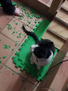 Image: Mr Bumpy sitting in the middle of a shredded green foam mat.