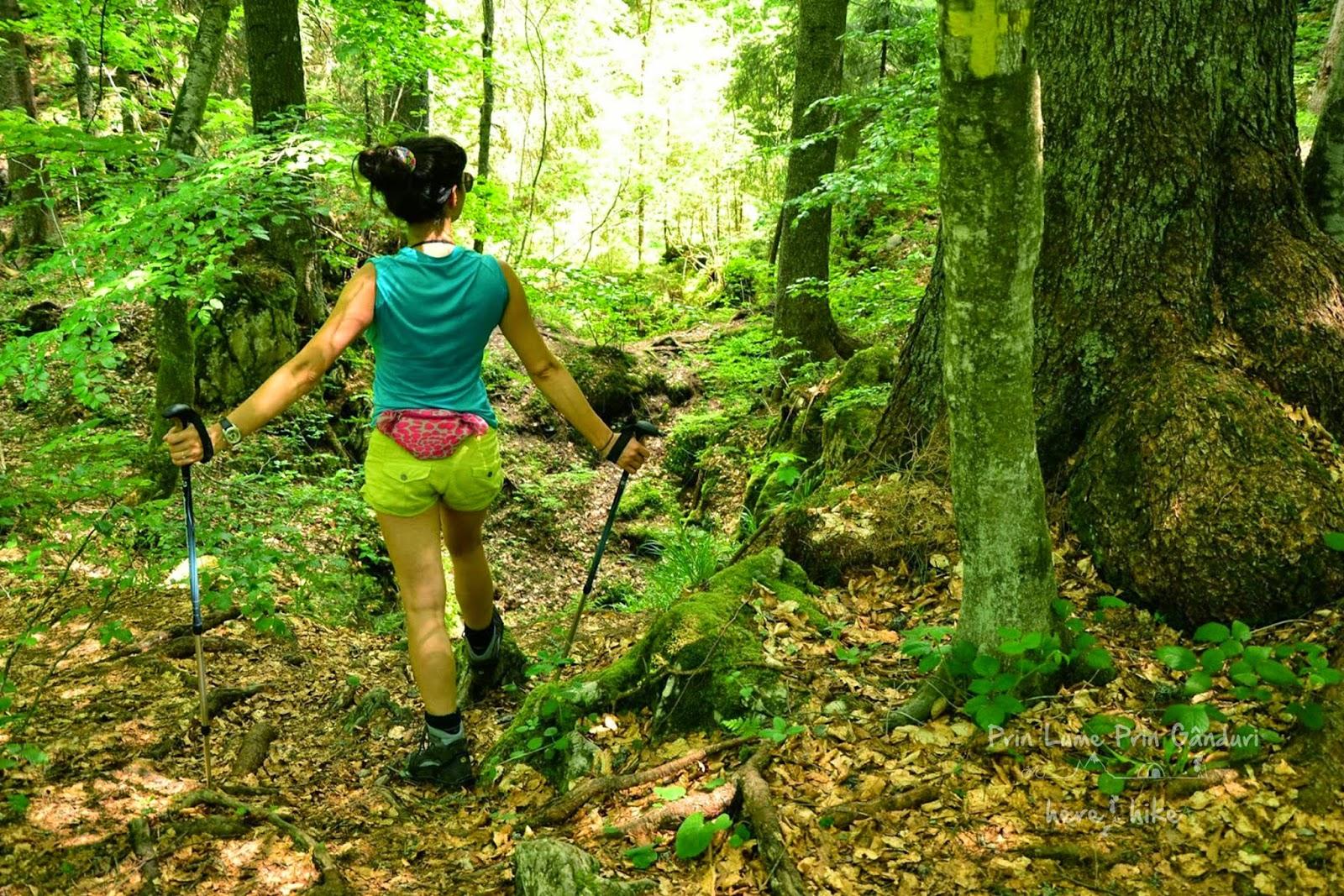 lumea-pierduta-hike-forest-track