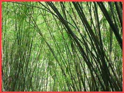 Da Uomo con bambù Extra Caldo 3er Pack per signore e signori