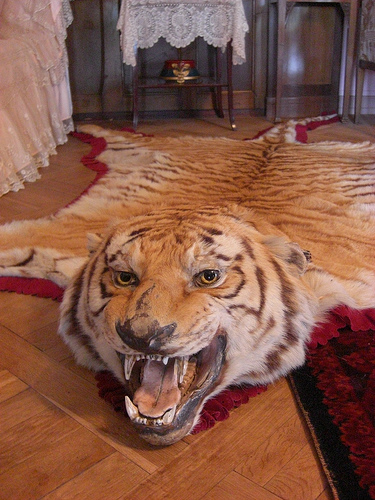 tiger+rug.jpg