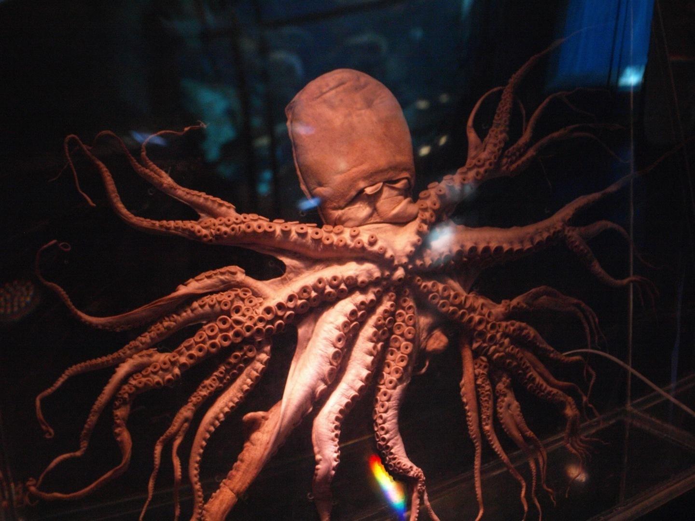 [Image: octopus.jpg]