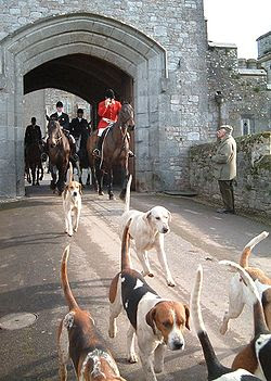 fox hunt from Powderham Castle England