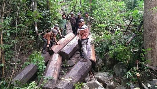 Gia Lai: Vụ phá rừng rồi tung lên Facebook không thể xử lý hình sự