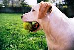 Bassie the Dog