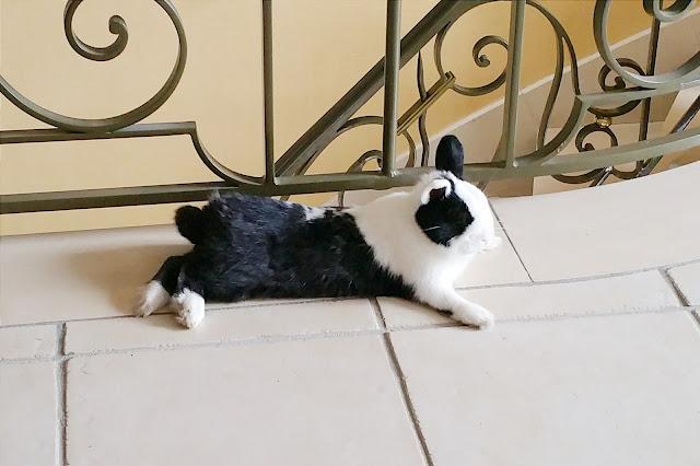 Avantage d'un lapin
