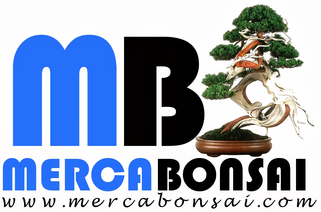 www.mercabonsai.com