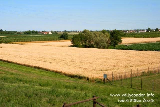 Campi agricoli del ferrarese