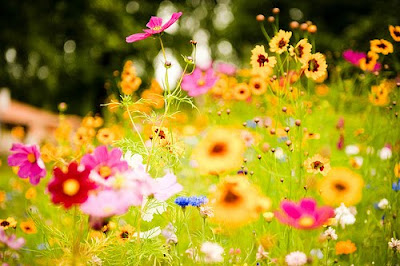 Jardines en Primavera (Tributo a la Naturaleza)