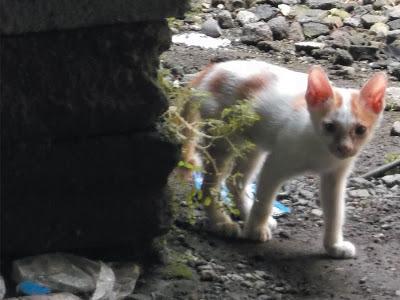 Foto-Foto Anak Kucing Lucu di Luar Jendela Kamar Kost Gue 14