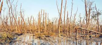 climate change impact on forest