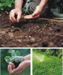 Como sembrar cesped