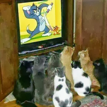 Funny picture of cats