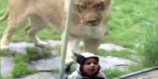 Singa Makan Manusia