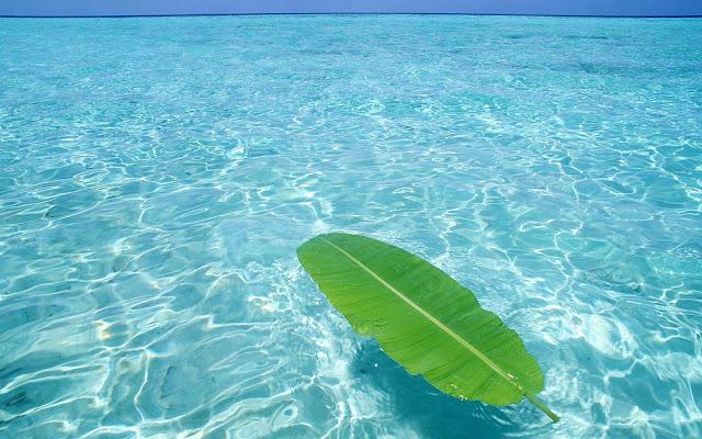 Helder blauw van de zee en groen blad