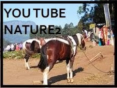 YOUTUBE NATURE1