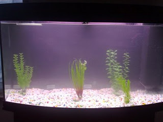How to cycle a fish tank for Cycling a fish tank