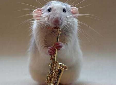 Funny+Rat_.jpg