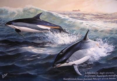 delfin de flancos blancos Lagenorhynchus acutus