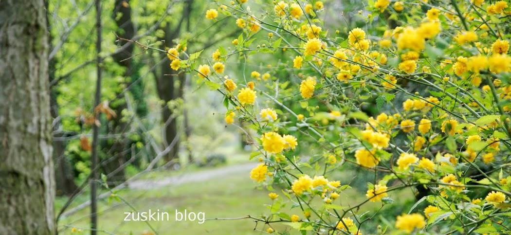 zuskin blog